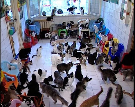 130 cats in one flat
